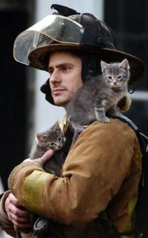saving-cats-8